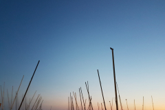 Masts-sunset
