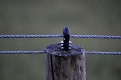 Fence-peg-