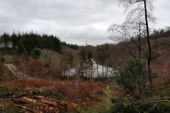 20201209_131858-Coed-Llyn-y-Garnedd-LeePritchard-scaled