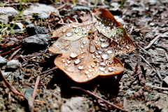 Brown-leaf-with-rain-drops